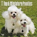 Toy and Miniature Poodles 2014 - Toypudel und Zwergpudel