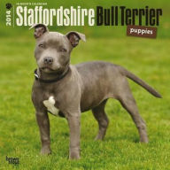 2014 Staffordshire Bull Terrier Puppies Square 12x12 - BrownTrout Publishers