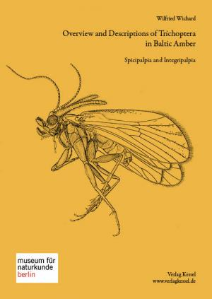 Overview and Description of Trichoptera in Baltic Amber - Spicipalpia and Integripalpia - Wichard, Wilfried