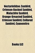 Nectariniidae: Sunbird